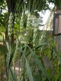 Parkerar returnerar den botaniska utomhus- växten för det gröna ogräset på och Arkivfoto