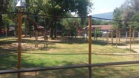 Parkerar soligt väder för zoomacedonia girafe Arkivbild