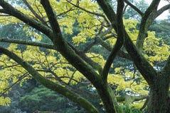 parkerar trees arkivbild