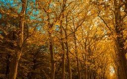 Parkgasse mit Bäumen in der Herbstfarbe lizenzfreie stockfotos