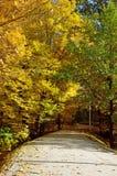 Parkgasse am sonnigen Tag des Herbstes Stockfotografie