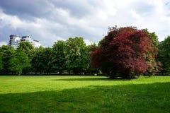 Parkgazon met groen gras en bloemen op de achtergrond van mooie kastanje en kersenbomen Royalty-vrije Stock Fotografie