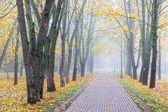 Parkgehweg mit gelben gefallenen Blättern und bloßen Bäumen Stockfotos