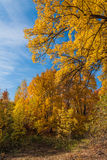 Parkherbst Wälder in Nord-Russland Lizenzfreie Stockbilder
