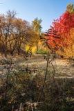 Parkherbst Wälder in Nord-Russland Lizenzfreies Stockfoto