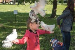 Parki St Petersburg Zdjęcia Royalty Free