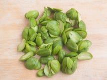 Parkia speciosa种子或苦涩豆在木背景 库存图片