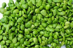 Parkia speciosa bean background Royalty Free Stock Photography