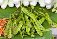Parkia speciosa - Bunch of Stink Beans Thailand Royalty Free Stock Photo