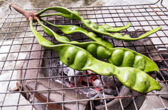 Parkia speciosa grill Stock Images