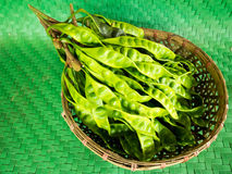 Parkia speciosa. (petai, bitter bean, twisted cluster bean, stinker or stink bean) is a plant of the genus Parkia in the family Fabaceae. It bears long, flat Stock Photography