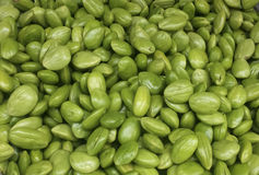 Parkia speciosa. Sato is a vegetable that is eaten very kind . Eat the young shoots and seeds. But rather than eat the seeds (Although the seeds are quite smelly Stock Photo