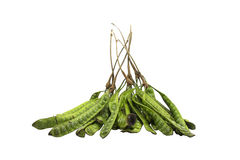 Parkia. The vegetables are delicious in southern Thailand Royalty Free Stock Image