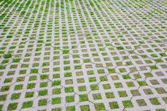 Parking area with grass growing through Stock Photography