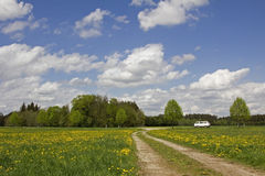 Parking car in rural landscape, meadow with dandelion Royalty Free Stock Images