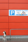 Parking for dogs. With parked dog Royalty Free Stock Photo