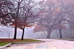 Parking lot in the park in late autumn. Royalty Free Stock Photos