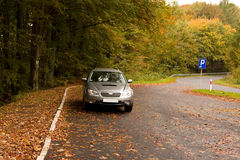 Parking place. In the middle of forest Stock Image