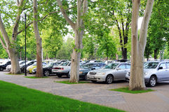 Parking place under plane trees. royalty free stock images