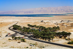 Parking under the palm trees near Dead Sea Stock Images