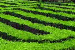 Parklabyrinth Barcelona Stockbild
