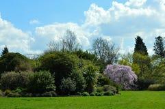 Parkland στην αγροτική νότια Αγγλία στην άνοιξη Στοκ Φωτογραφία