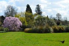 Parkland στην αγροτική νότια Αγγλία στην άνοιξη Στοκ φωτογραφίες με δικαίωμα ελεύθερης χρήσης