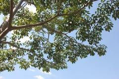 Parkland сада Стоковые Изображения RF