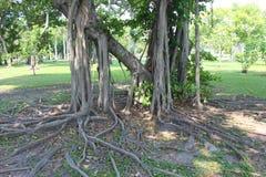 Parkland сада Стоковая Фотография RF