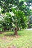 Parkland сада Стоковые Фотографии RF