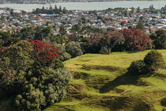Parkland above Auckland suburb Royalty Free Stock Images