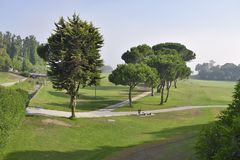 Parkland with coniferous trees Andalusia Spain stock photos