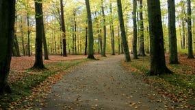 parkland De Kleurrijke Dalende Bladeren van de seizoenverandering stock foto's