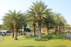 Parkland del jardín Imagenes de archivo