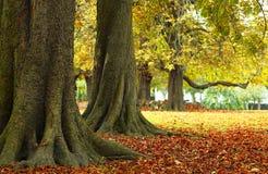 Parkland do outono Fotografia de Stock Royalty Free