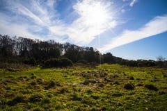 Parkland em parte silvestre na luz do sol Imagem de Stock Royalty Free