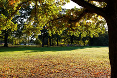 Parkland at fall background. Indian summer scenery at a lakeside park with lots of space. Recreational area in German nature Royalty Free Stock Photo