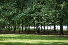 Parkland with green tree and grass. Environment of public parkland surrounded by green tree and covered by grass in summer season Stock Photo