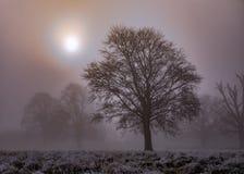 Parkland im Winter Stockfoto
