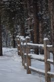 Parkland, Jasper National-park stock foto's