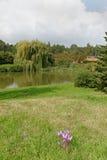 Parkland med en sjö Arkivbild