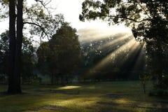Parkland med solen till och med dimma arkivbilder