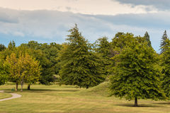 Parkland with oak trees. In early autumn Stock Photo