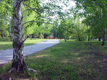 Parkland. Parks, Park, green area, sidewalk for walking, white birch, summer time rest of the city, a quiet cozy place royalty free stock photos
