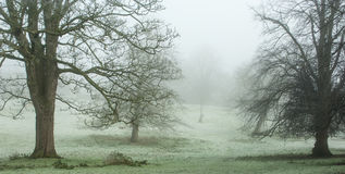 Parkland trees and mist. Parkland trees in winter frost and fog Stock Image