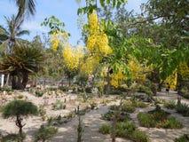parkland van Vietnam stock fotografie