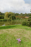 Parkland z jeziorem Fotografia Stock