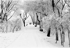 Parklane di inverno Immagine Stock