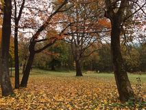 Parklife do outono Foto de Stock Royalty Free