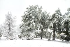 Parklike Setting with garden during snowstorm Stock Images